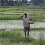 भारतबाट मल नआएपछि झापाका किसानले रोपाइँ गर्न पाएनन्