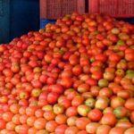 कृषि प्रधान देशमा ४७ करोडको टमाटर आयात, नेपाली उत्पादनले पाउँदैन बजार !